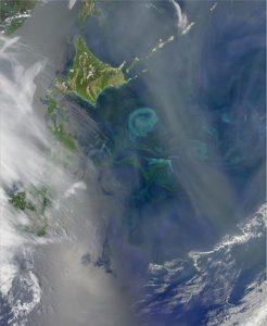 spring phytoplankton bloom