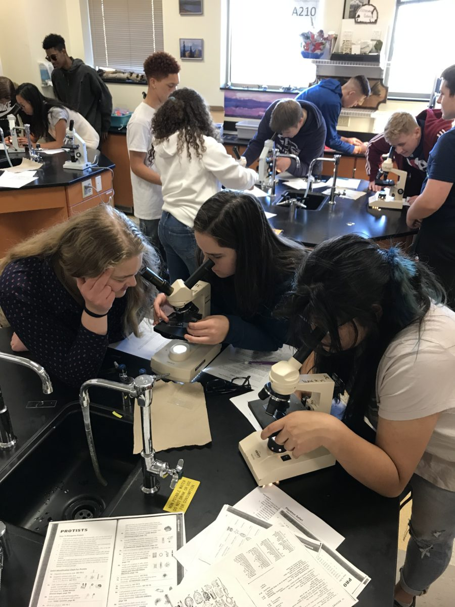Oceanography students using their microscopes on a plankton safari