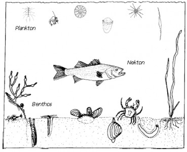 Image from: Fisheries and Oceans Canada