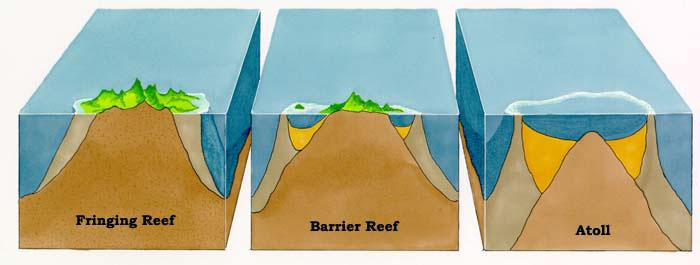 Chapter 10  Coral Reefs  U2014 Mr  Van Arsdale
